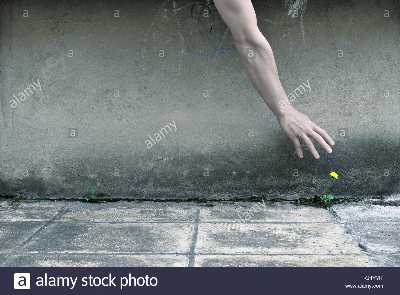 hand picking up - Stock Image