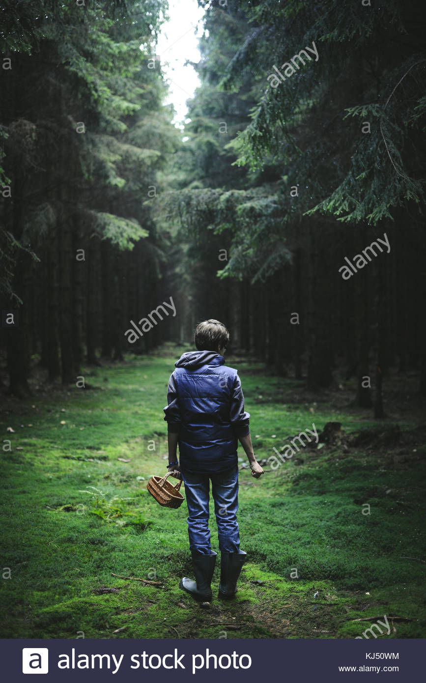 Boy picking mushrooms in the woods - Stock Image