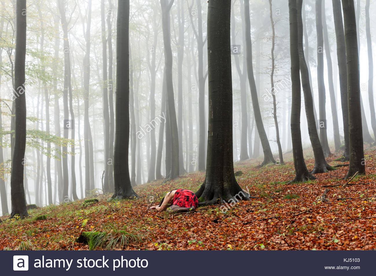 misty autumn forest with woman lying as if dead - Stock Image