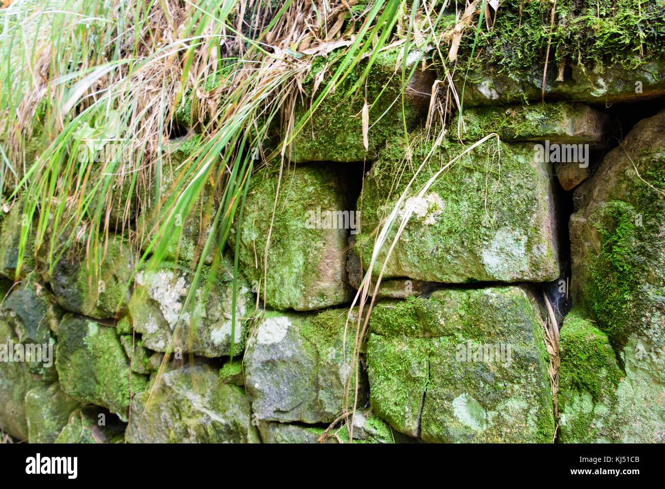 Stone wall with green moss growing on it at Moganshan in China - Stock Image