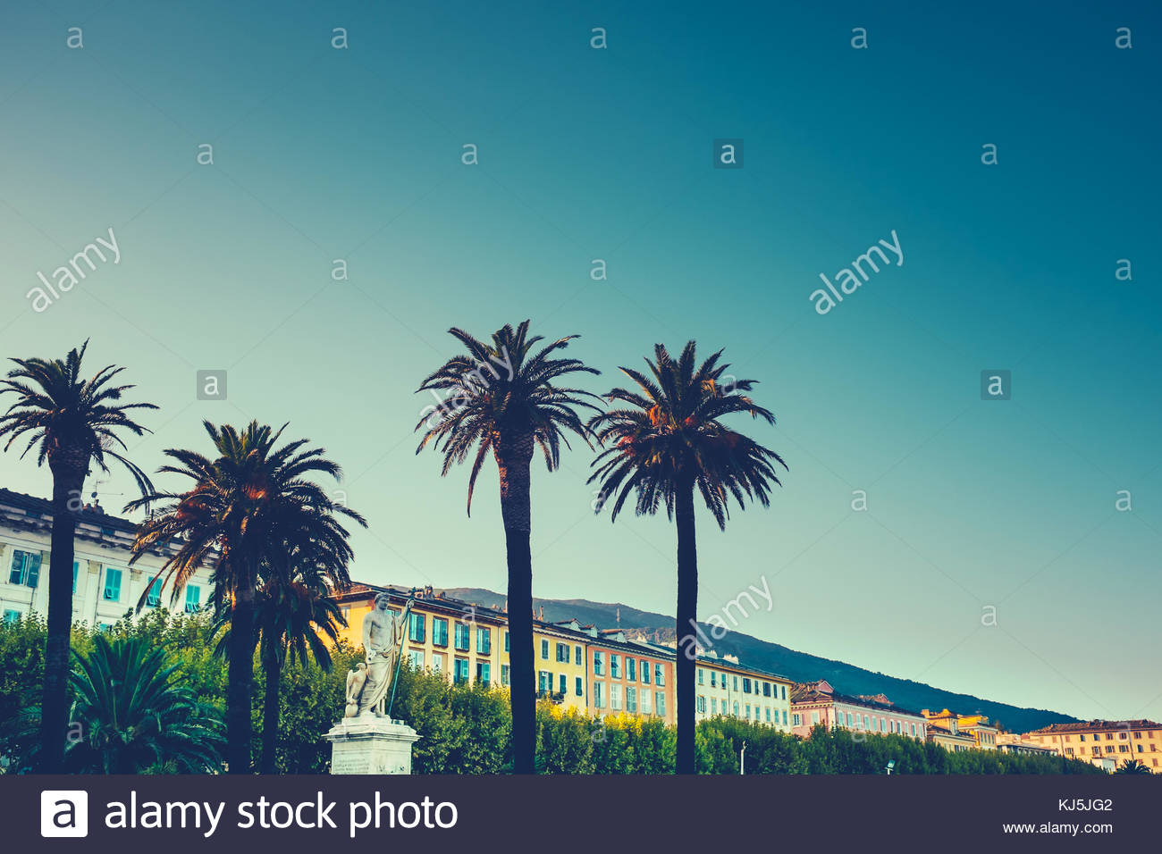 Palm trees on Calvi - Stock Image
