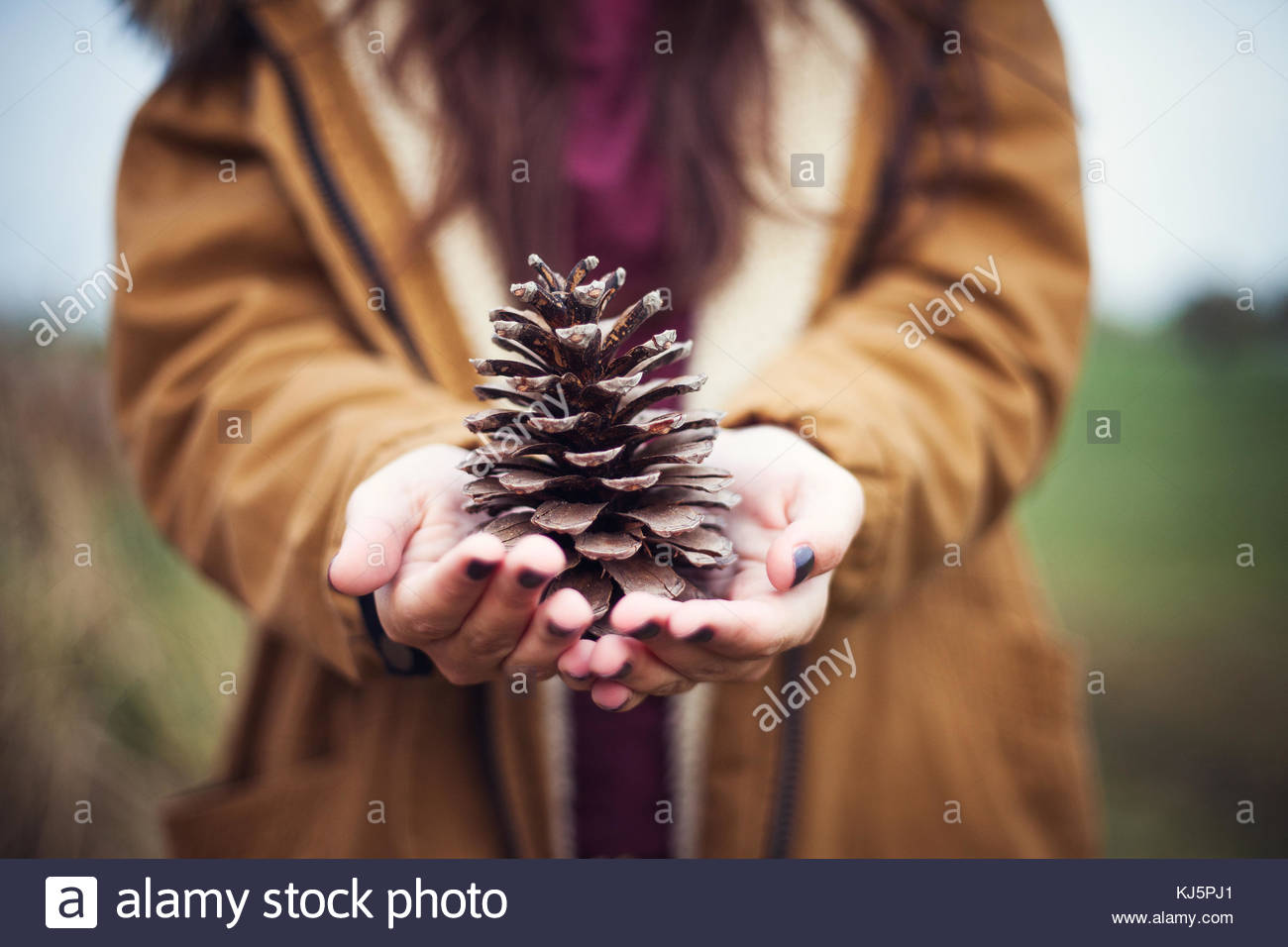 pine cone held by woman - Stock Image