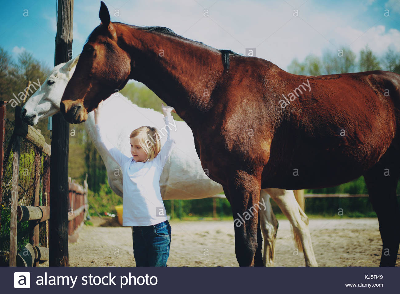 Little girl and horses - Stock Image