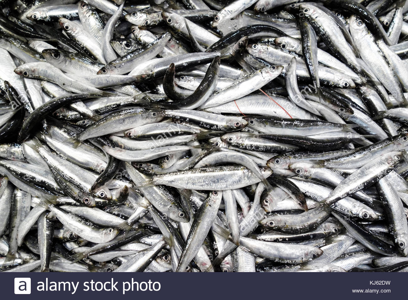 Herring on market stall table, top view - Stock Image