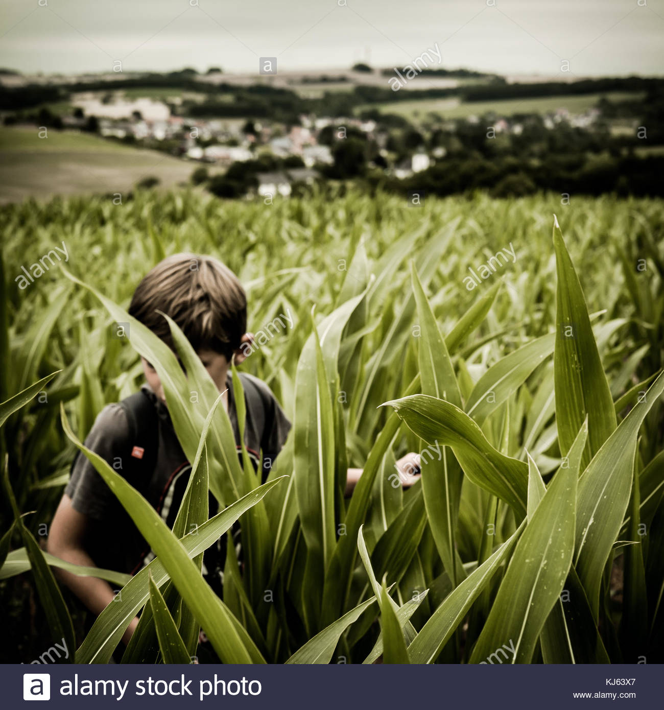 Boy in cornfield - Stock Image