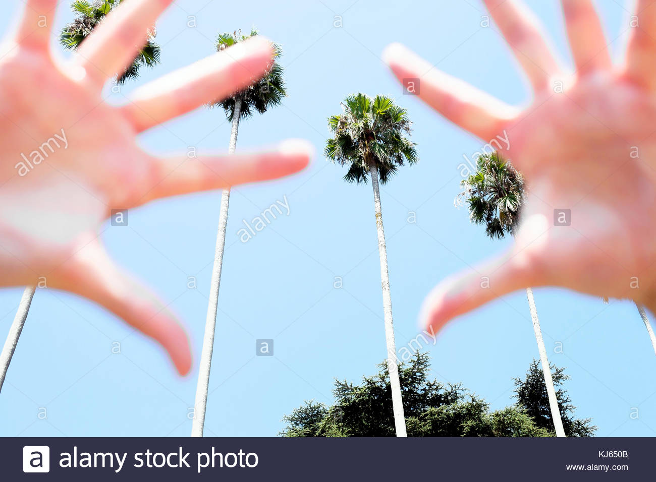 Hands and palmtrees - Stock Image