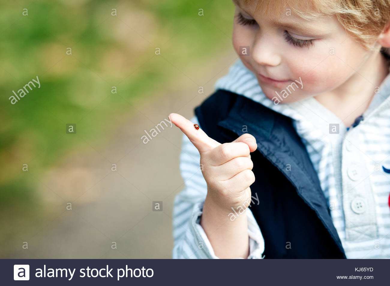 child looking at ladybird - Stock Image