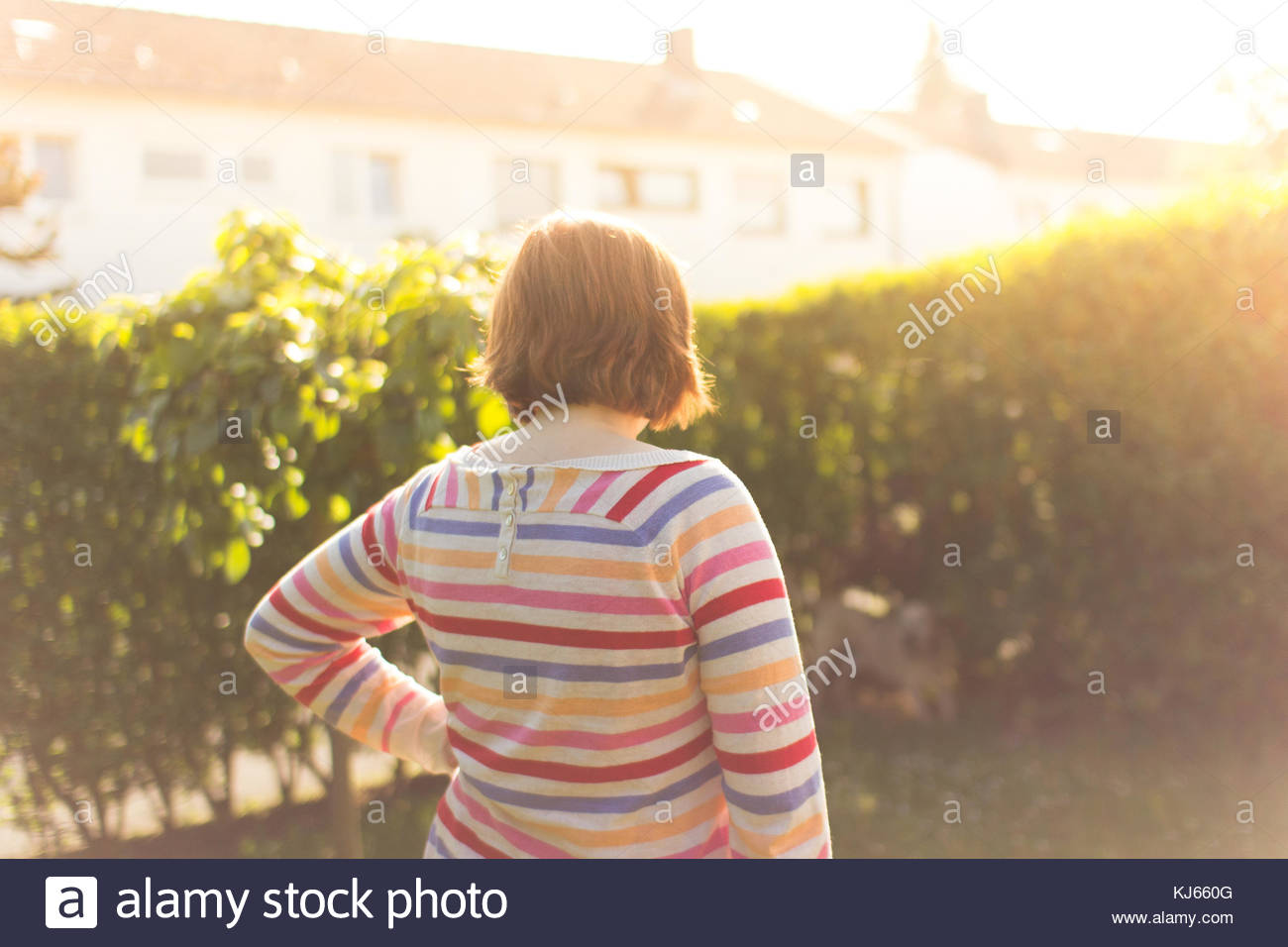 woman in suburb by hedge - Stock Image