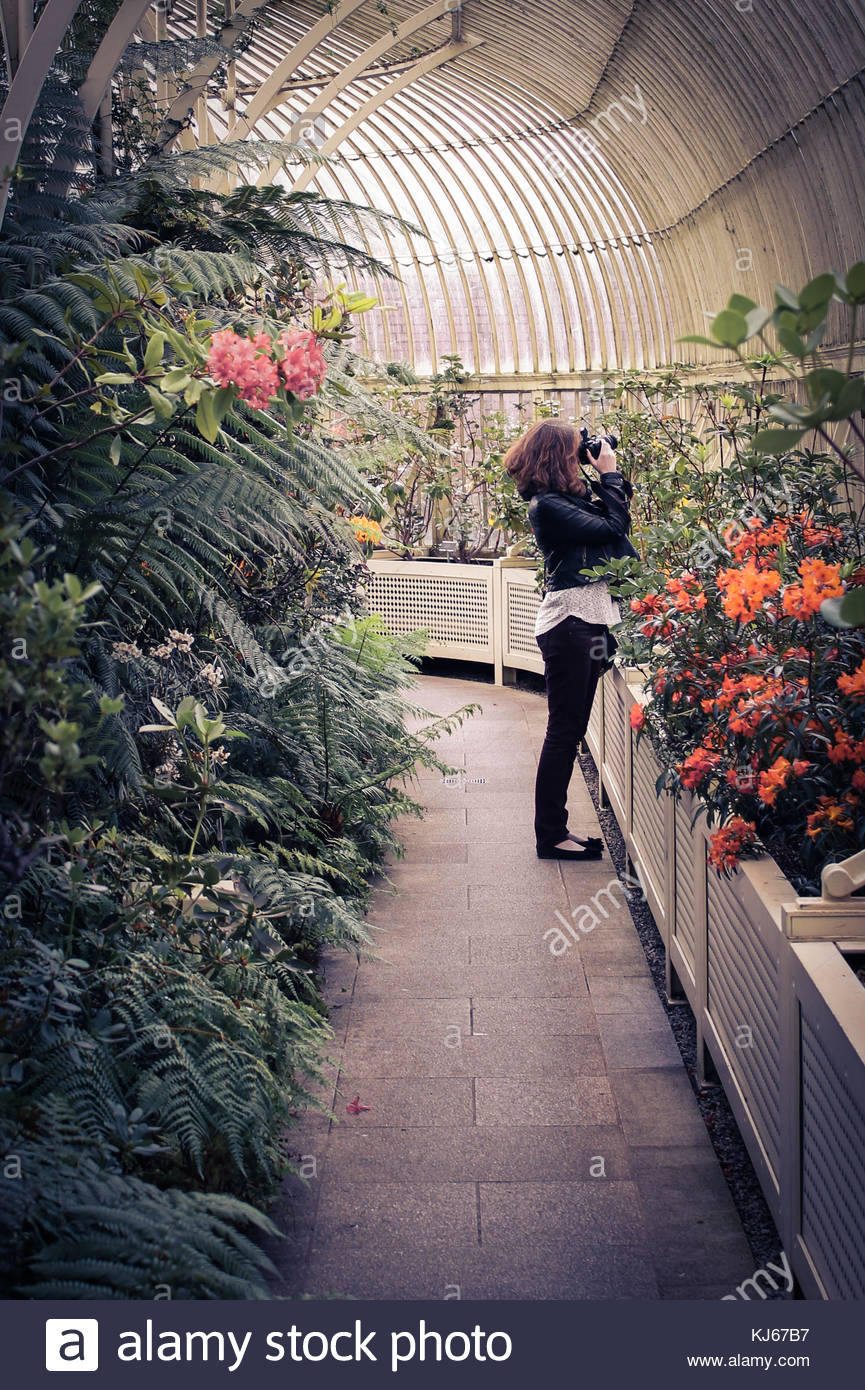 Young woman photographing in a greenhouse - Stock Image