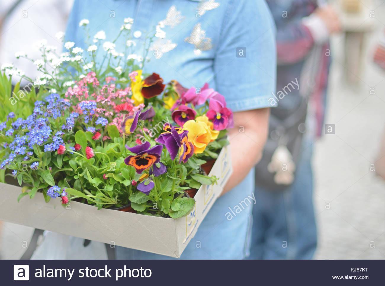 Box of flowers - Stock Image