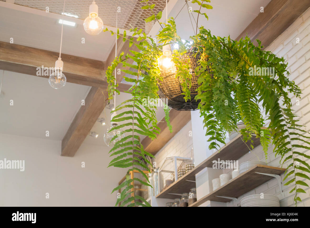 Fern In Plant Pot Hanging On Ceiling Stock Photo Stock Photo