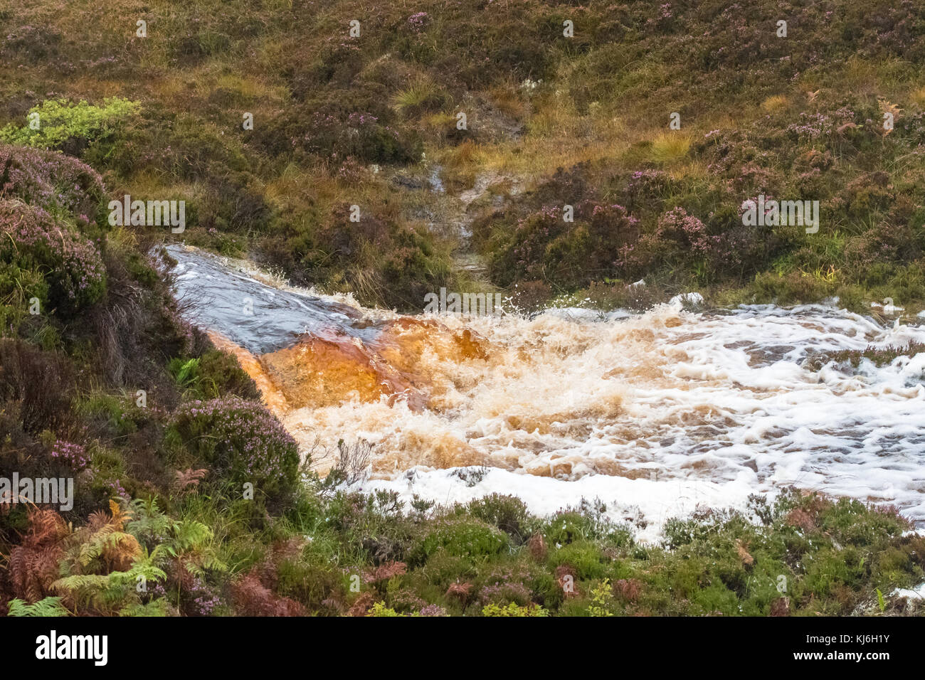 fast flowing peat stained river with foam after heavy rain - Hoy, Orkney, Scotland, UK - Stock Image