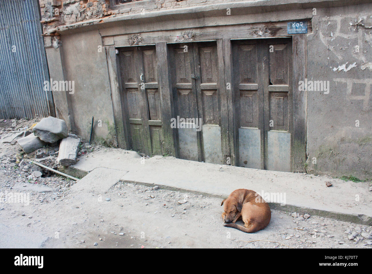A stray dog in Thamel, Kathmandu. After the earthquake in Nepal. - Stock Image