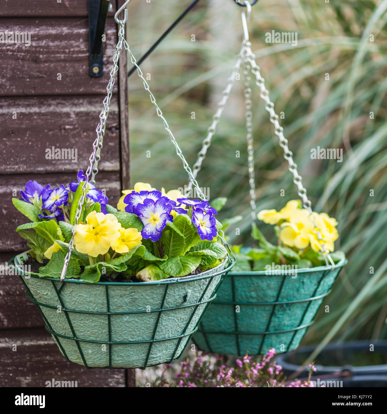 A pair of hanging baskets hang from the corner of a shed. - Stock Image