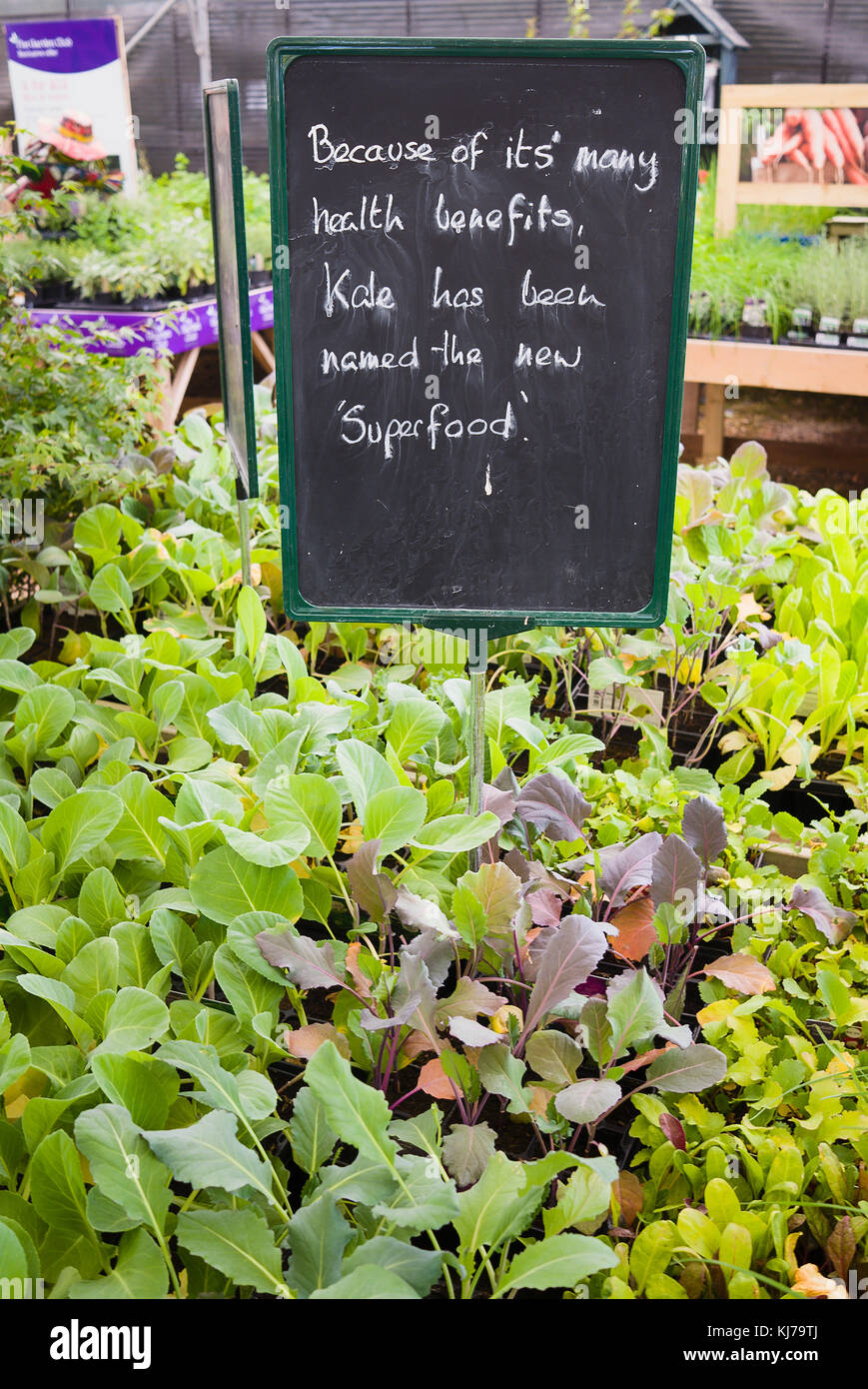 Young green vegetable plants for sale by self-selection with a persuasive notice extolling the health virtues of - Stock Image