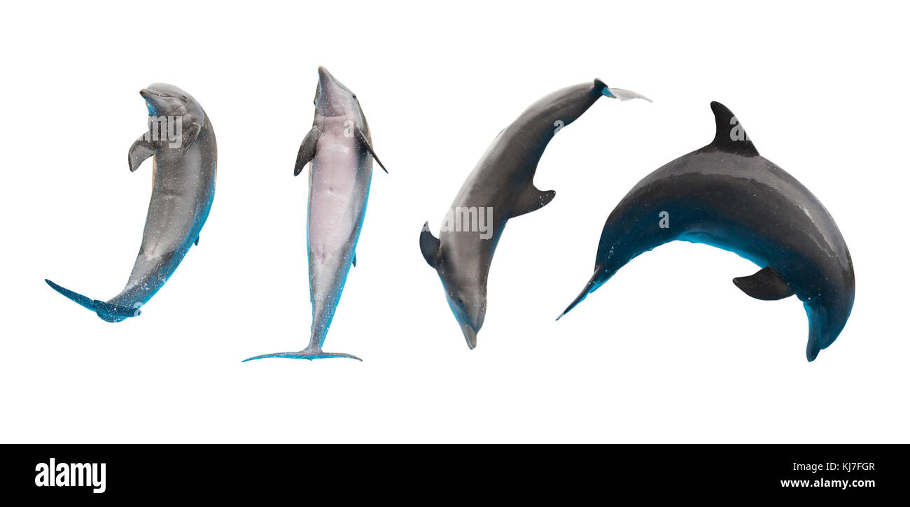 Row of jumping and leaping dolphins isolated on white background - Stock Image