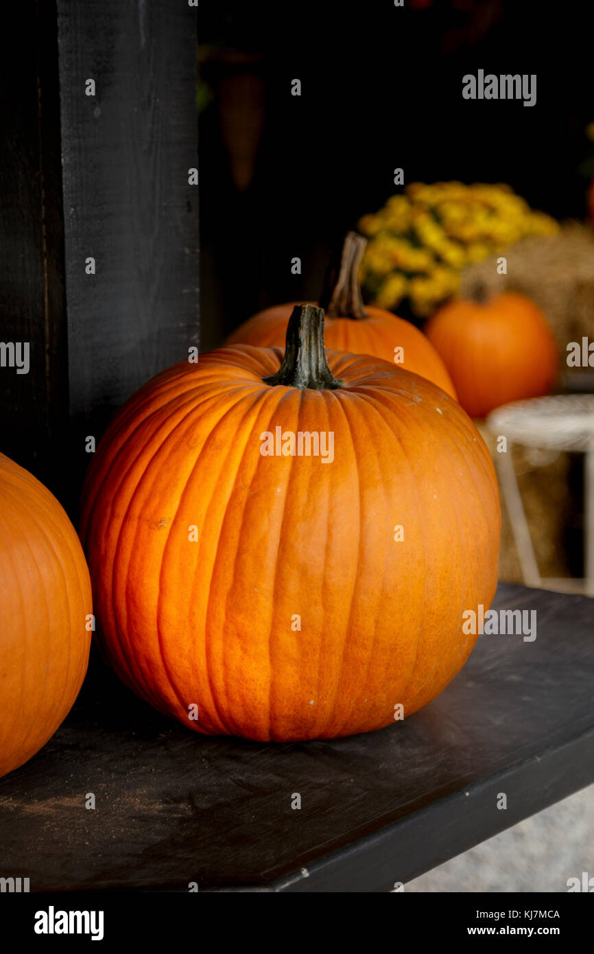 Fresh Pumpkins Stock Photo