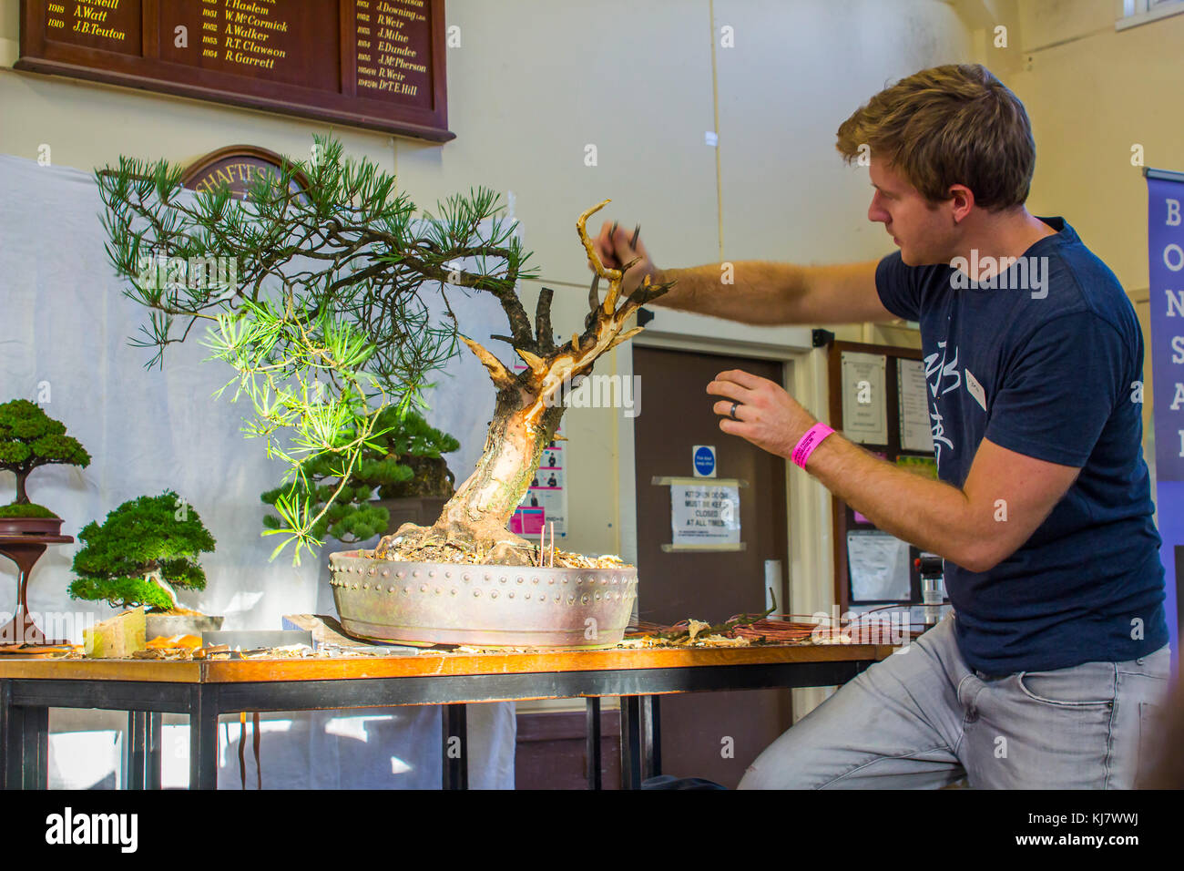 Bjorn Bjorholm In The Early Stages Of Creating A Scots Pine Pinus Stock Photo Alamy