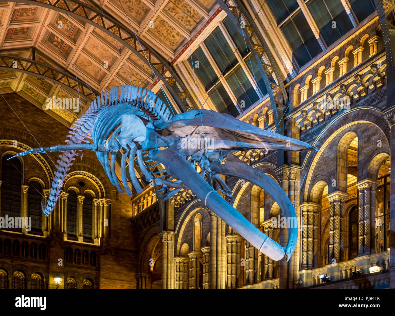 Blue whale skeleton named Hope, hanging in the Hintze Hall, Natural History Museum, London, UK. - Stock Image