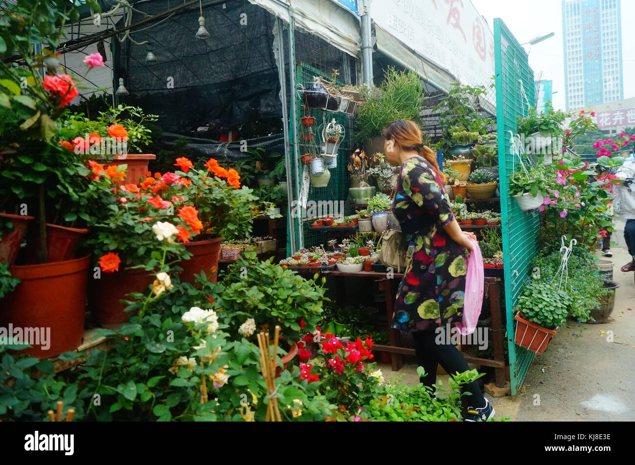 The women in the market of flowers and trees, flowers, buy