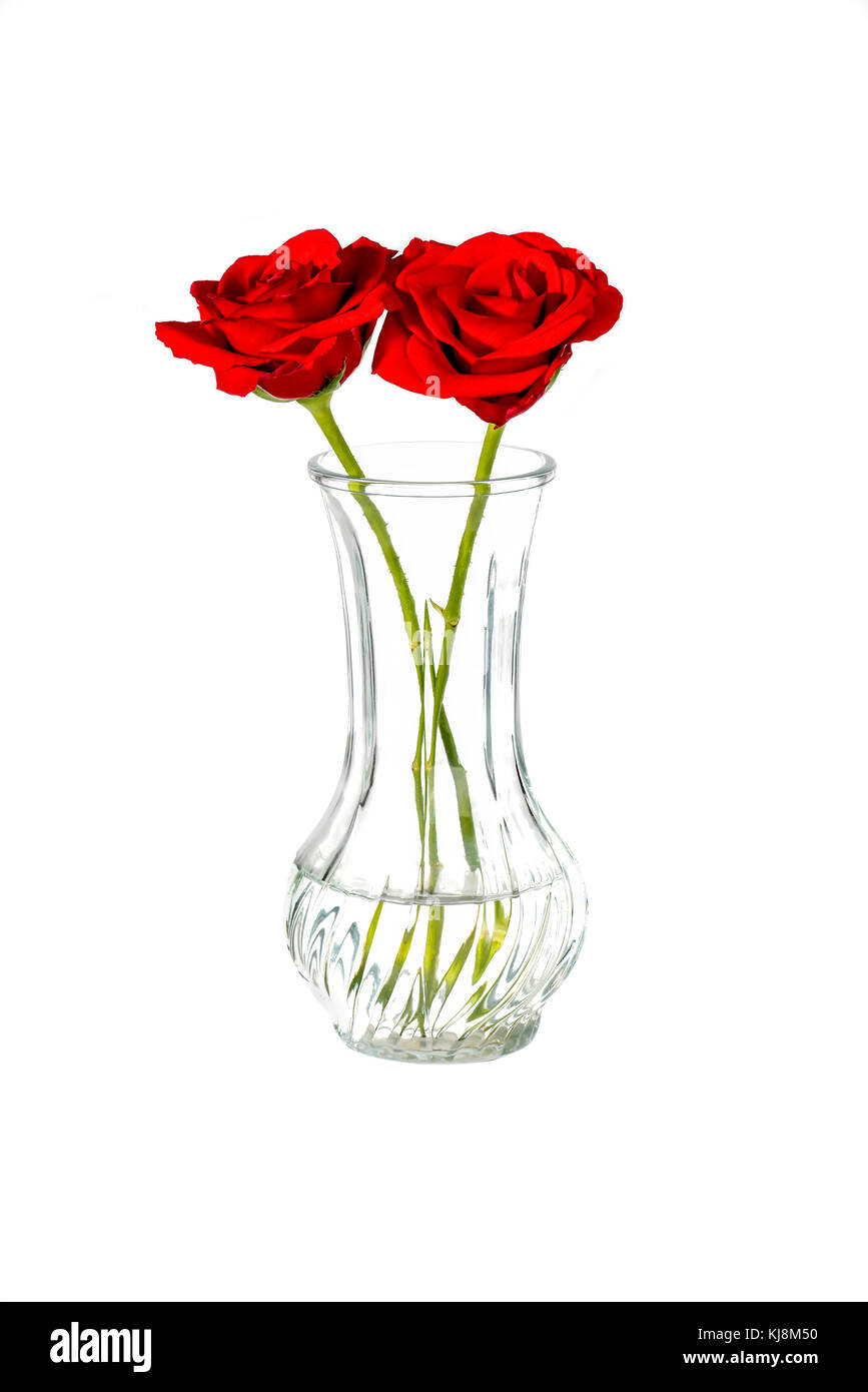 two red roses in a vase on a white background - Stock Image