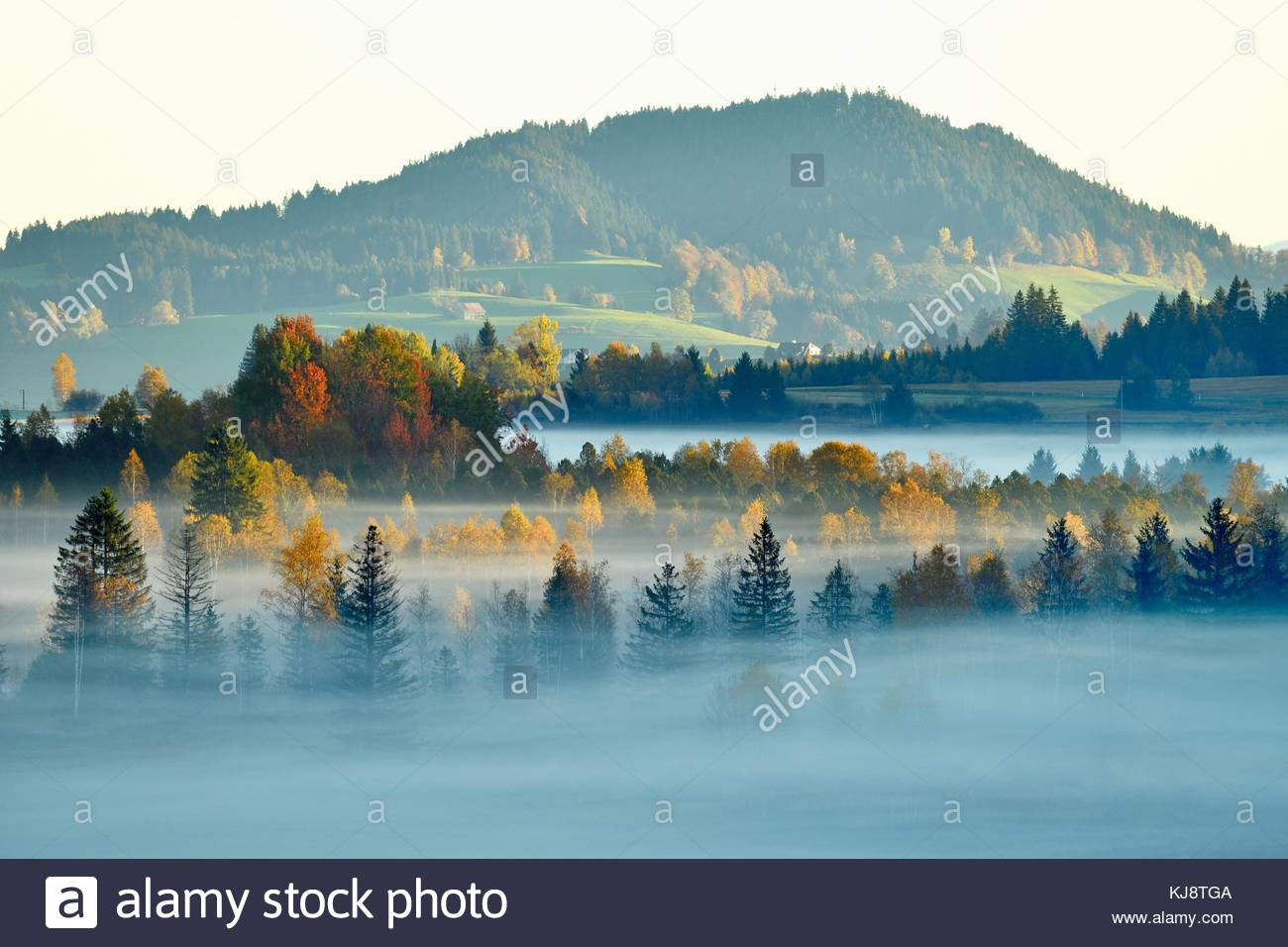 Moor, trees in the morning mist, Rothenthurm, Canton Schwyz, Switzerland - Stock Image