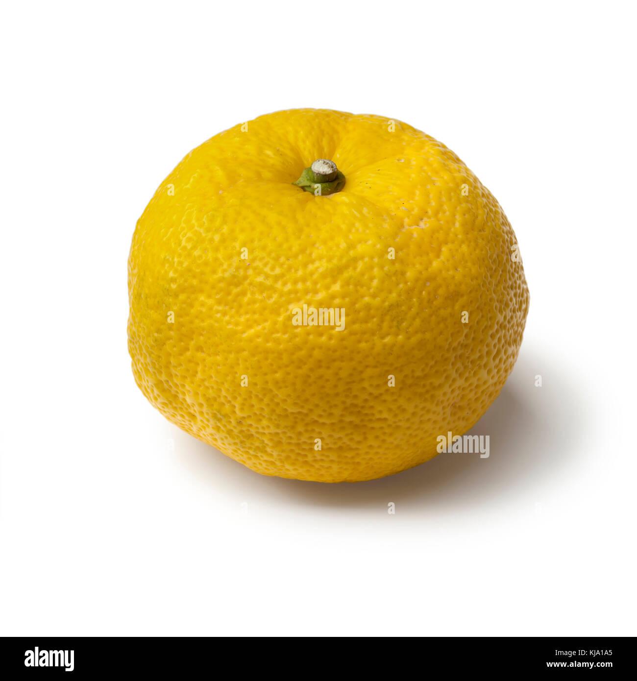Singel fresh yellow Japanese Yuzu on white background - Stock Image