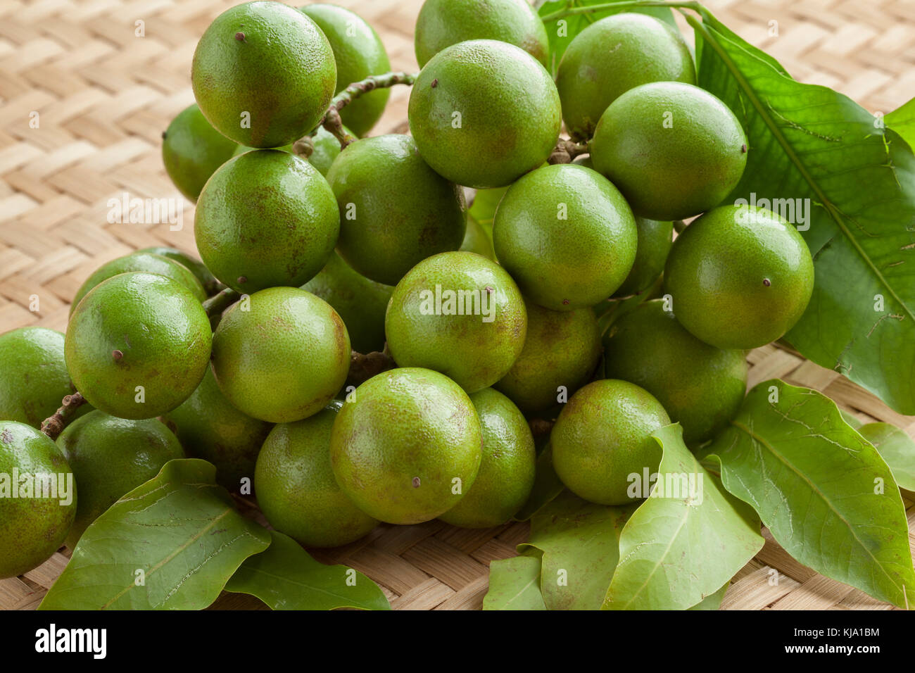 Fresh ripe unpeeled quenepa fruit on a twig with leaves - Stock Image