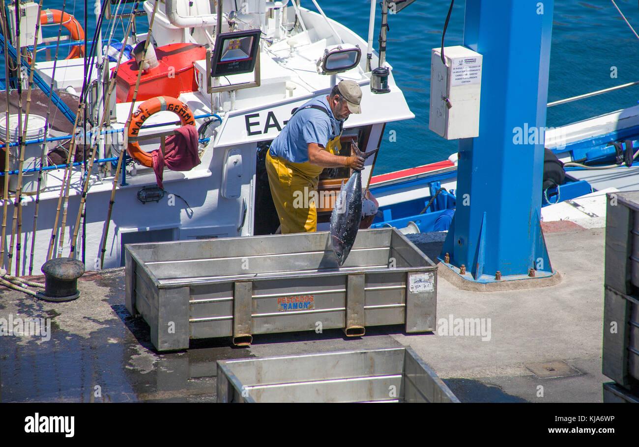 Fisherman unloading thuna fish at the harbour of San Juan, west coast of the island, Tenerife island, Canary islands, - Stock Image