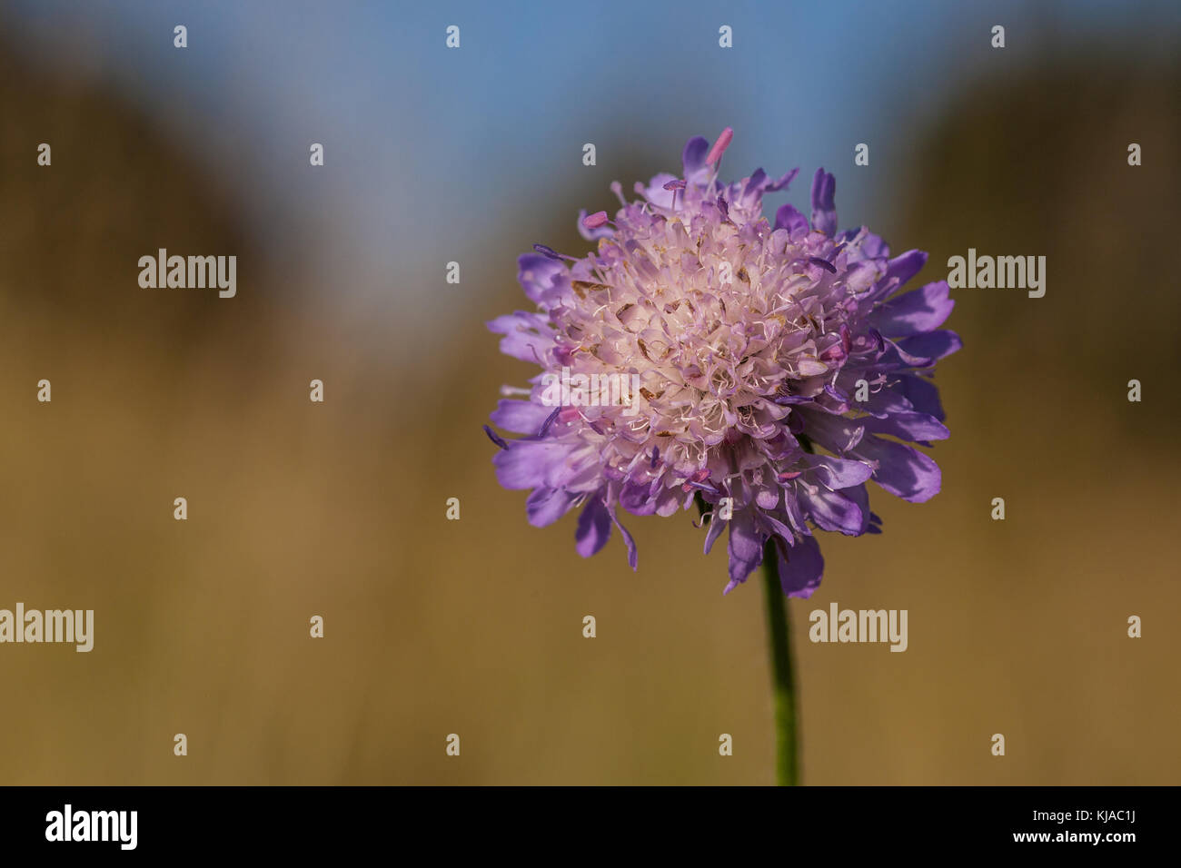 Blüte freigestellt - Stock Image