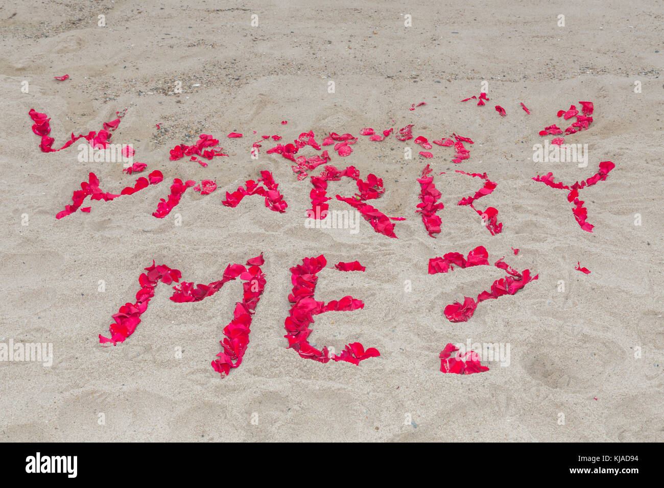 the question marry me spelled out in rose petals on an ocean beach, montuak, ny - Stock Image