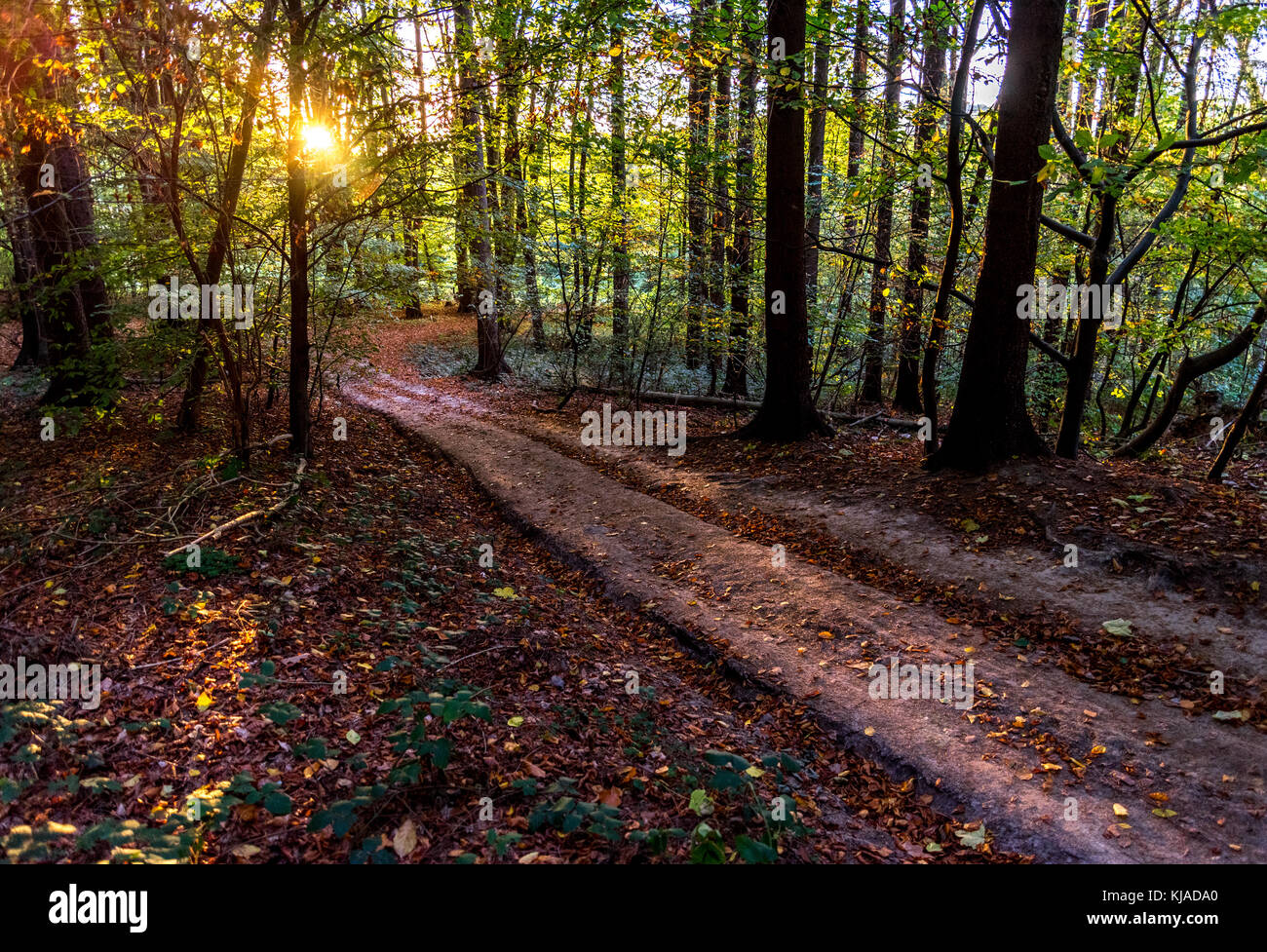 Forest path in afternoon sun, autumn, Germany Stock Photo