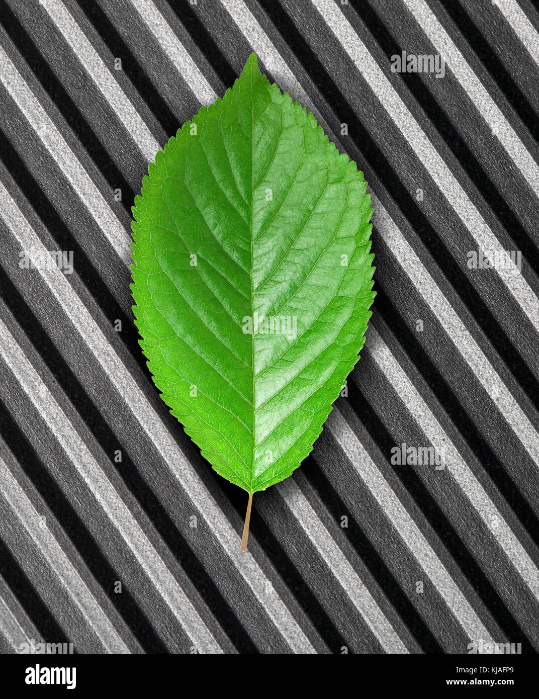 Green leaf lying in the rays of light on scratched metal. Top view. Modern technology and nature compatible. New - Stock Image