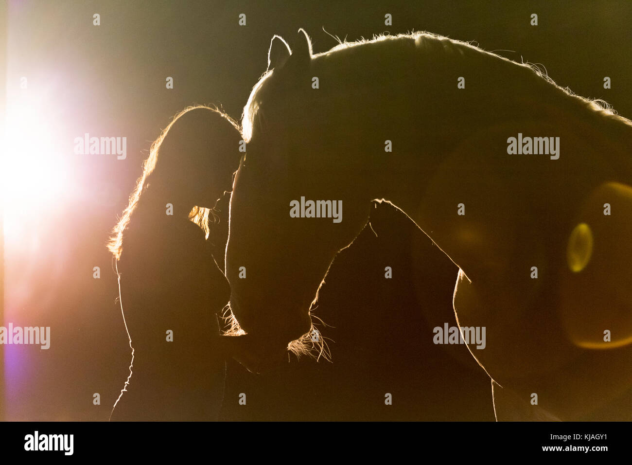 Lipizzan horse. Portrait of adult stallion (Siglavy Capriola Primas) with young woman in darkness, with light in - Stock Image