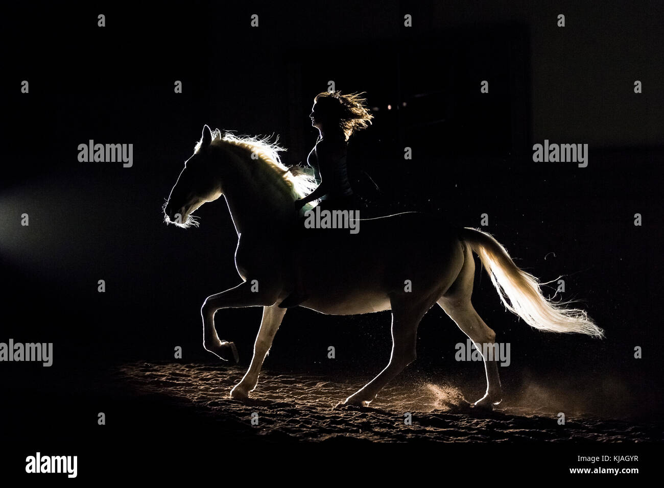 Lipizzan horse. Adult stallion (Siglavy Capriola Primas) with rider in darkness, seen against light. Austria - Stock Image