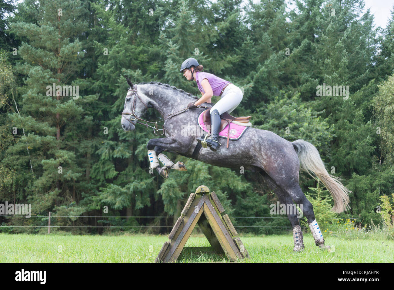 Hanoverian Horse. Rider clearing an obstacle during a cross-country ride, seen from below. Germany - Stock Image