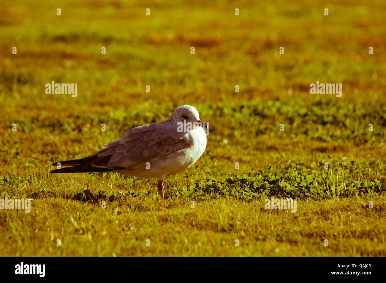Close up of bird - Stock Image