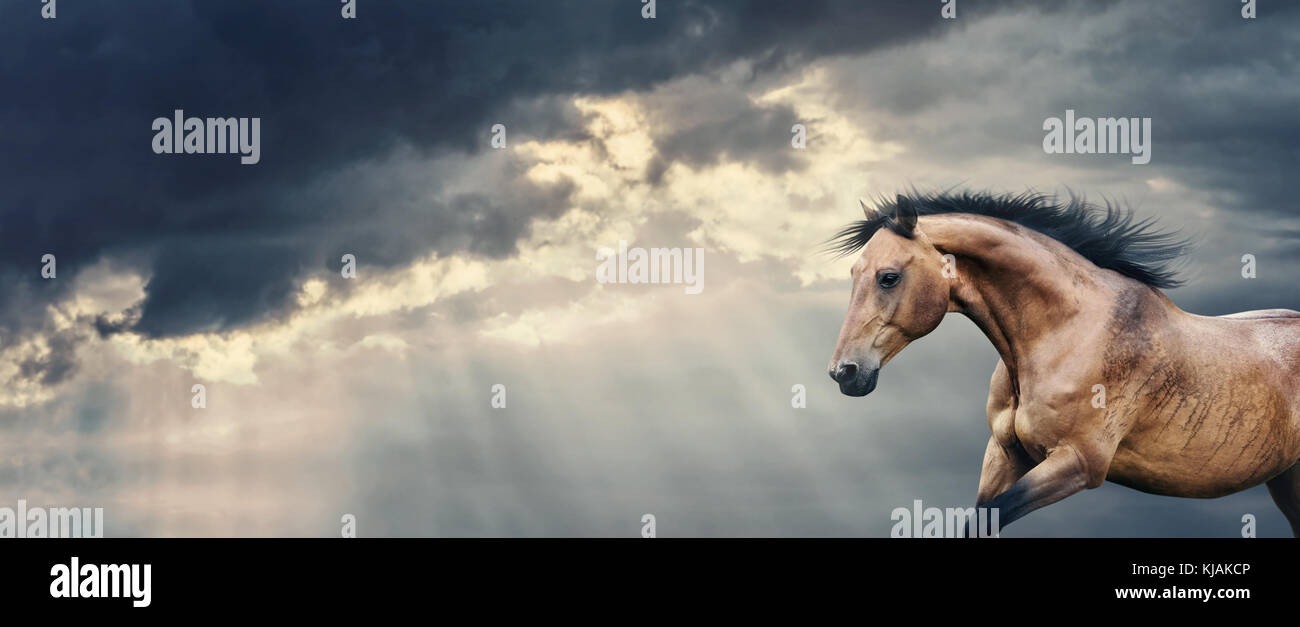 Bay Horse running at beautiful dark storm cloudy sky with rays of the sun breaking through the clouds and rain, - Stock Image