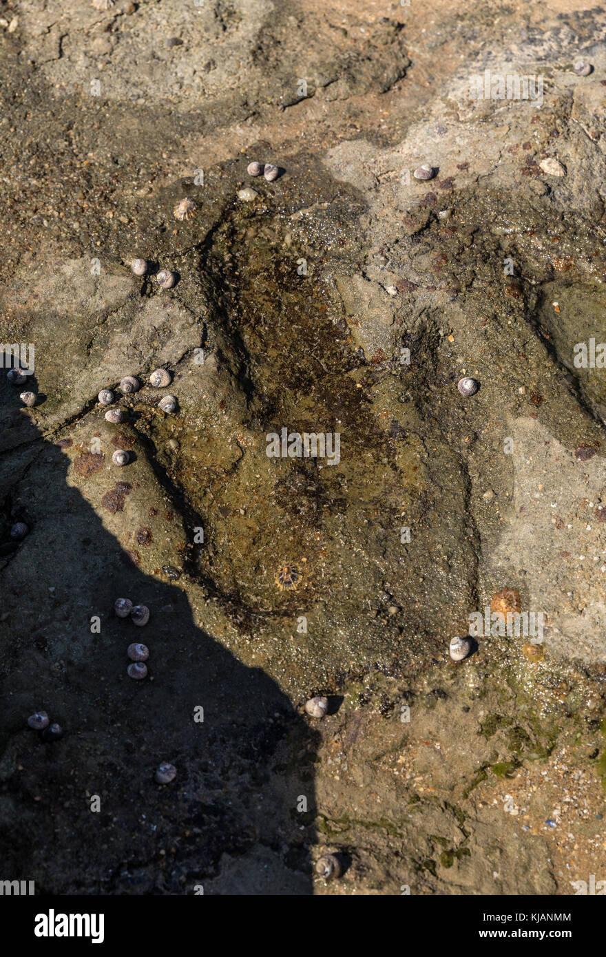 Dinosaur footprint in Talmont-Saint-Hilaire (Vendée, France) - Stock Image