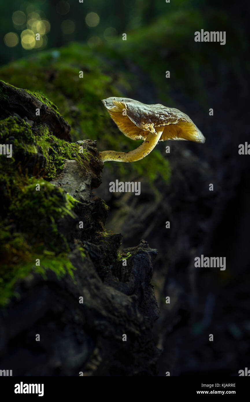 Mushroom On Mossy Log - Stock Image