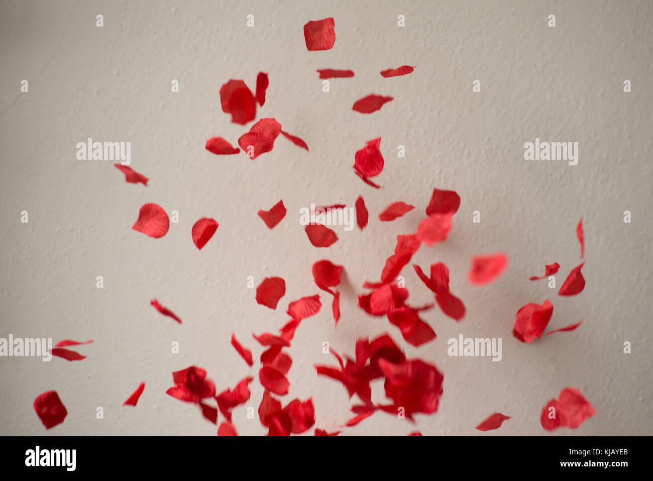 Falling Rose Petals - Stock Image