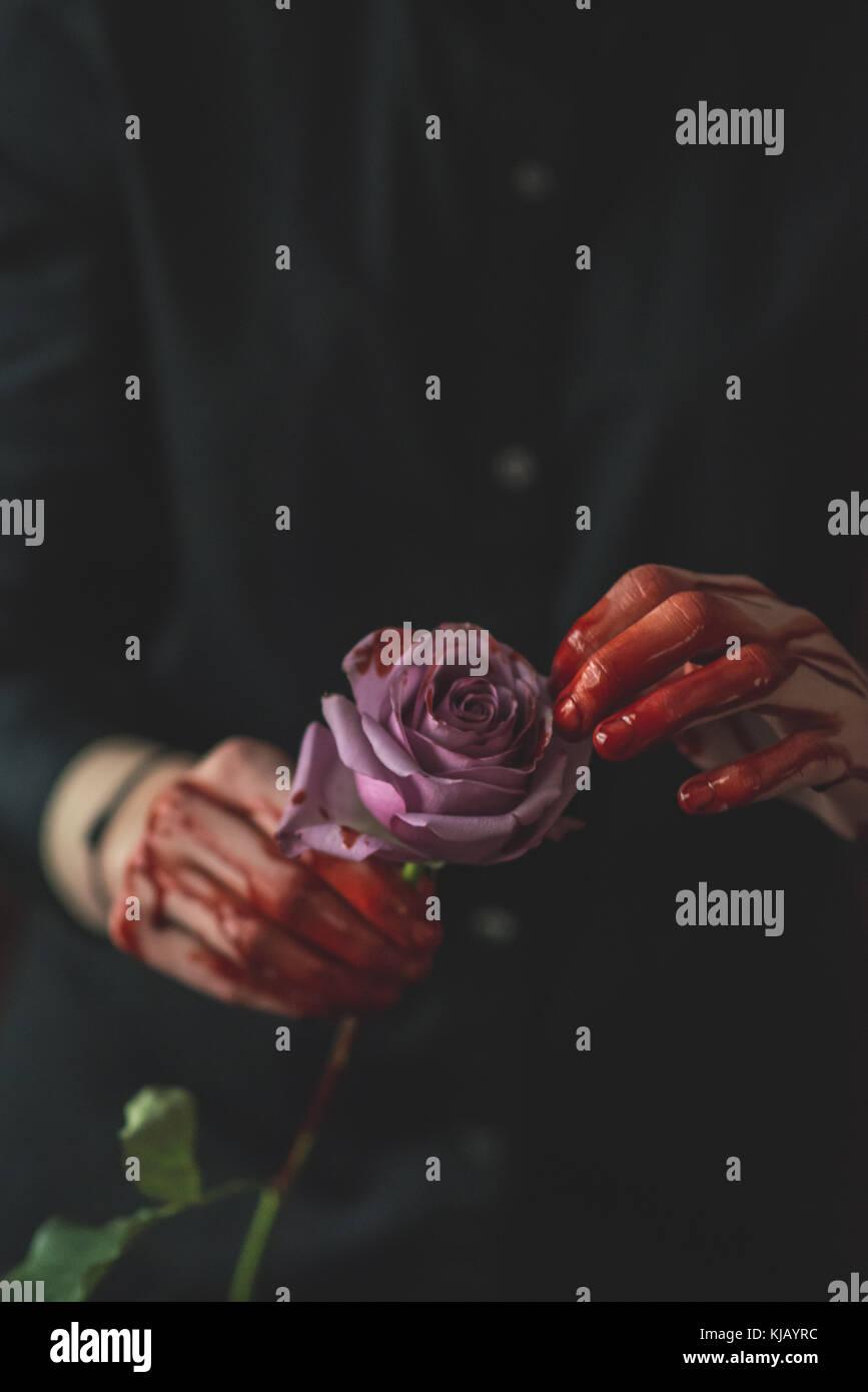 Bloody Pink Rose - Stock Image