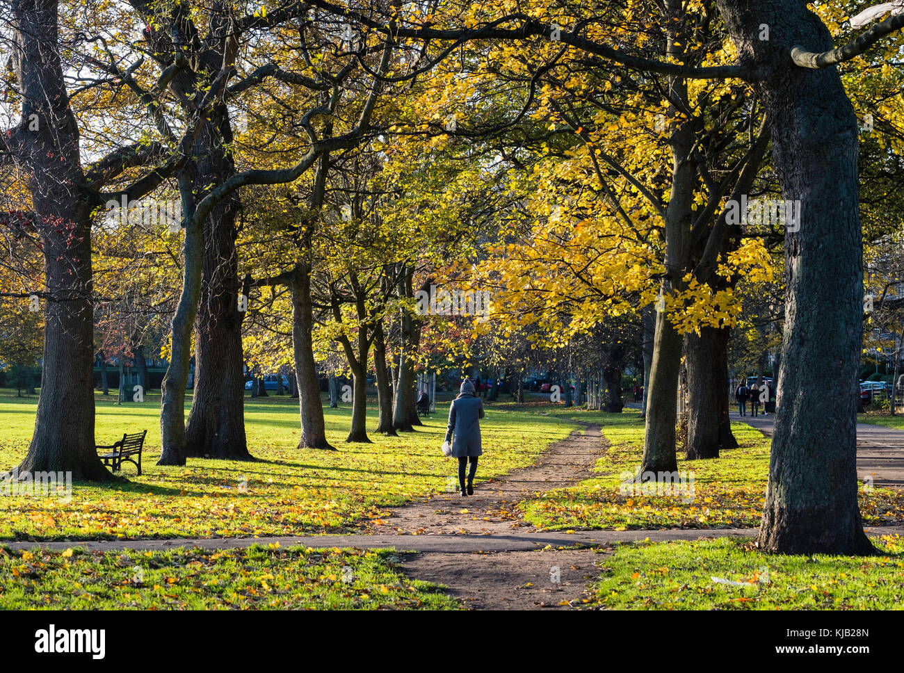 the Meadows park in Edinburgh, Scotland, United Kingdom - Stock Image