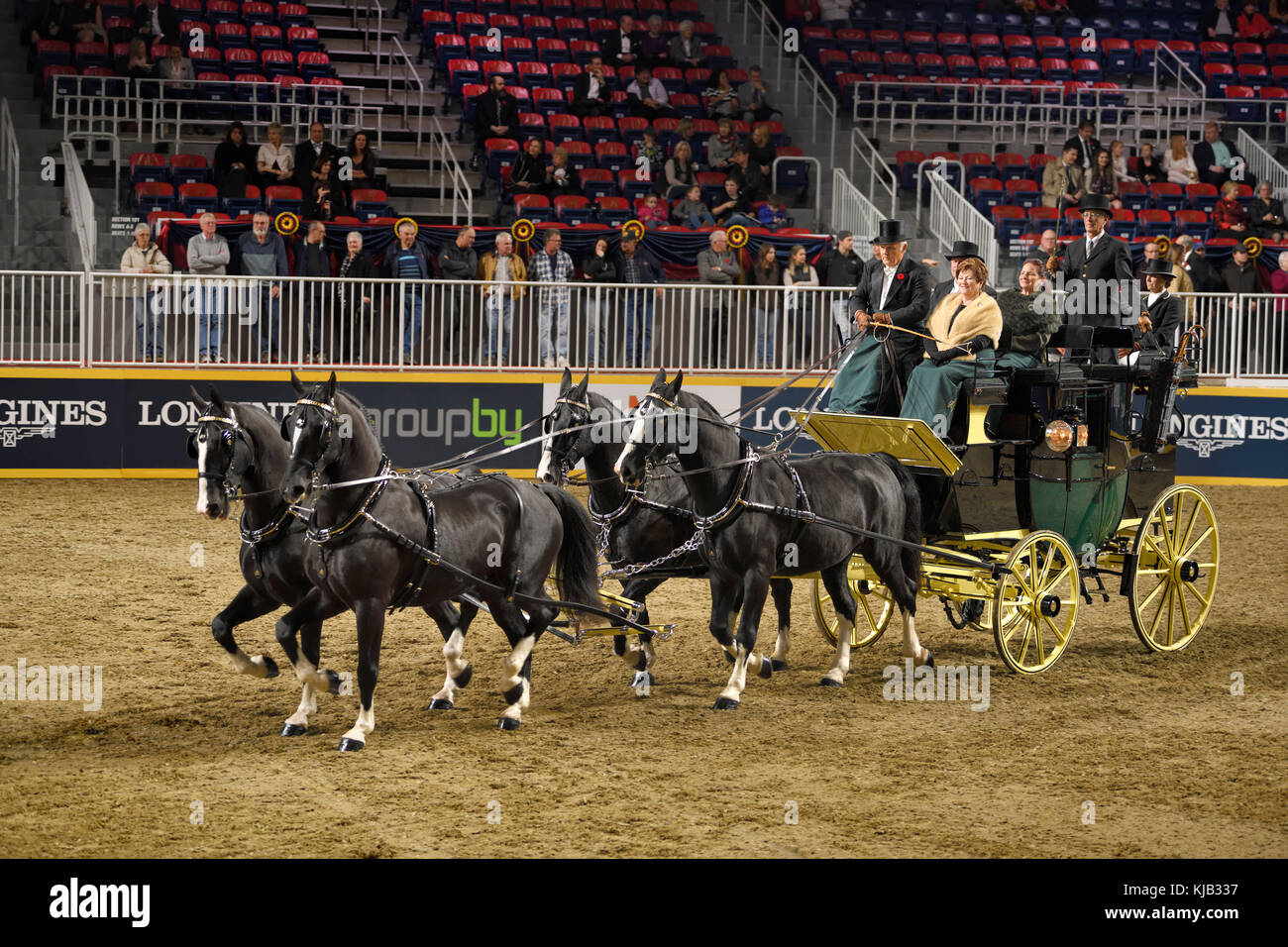 Four black horses at Green Meadows Four in Hand Coaching Class performance at The Royal Horse Show Ricoh Coliseum - Stock Image