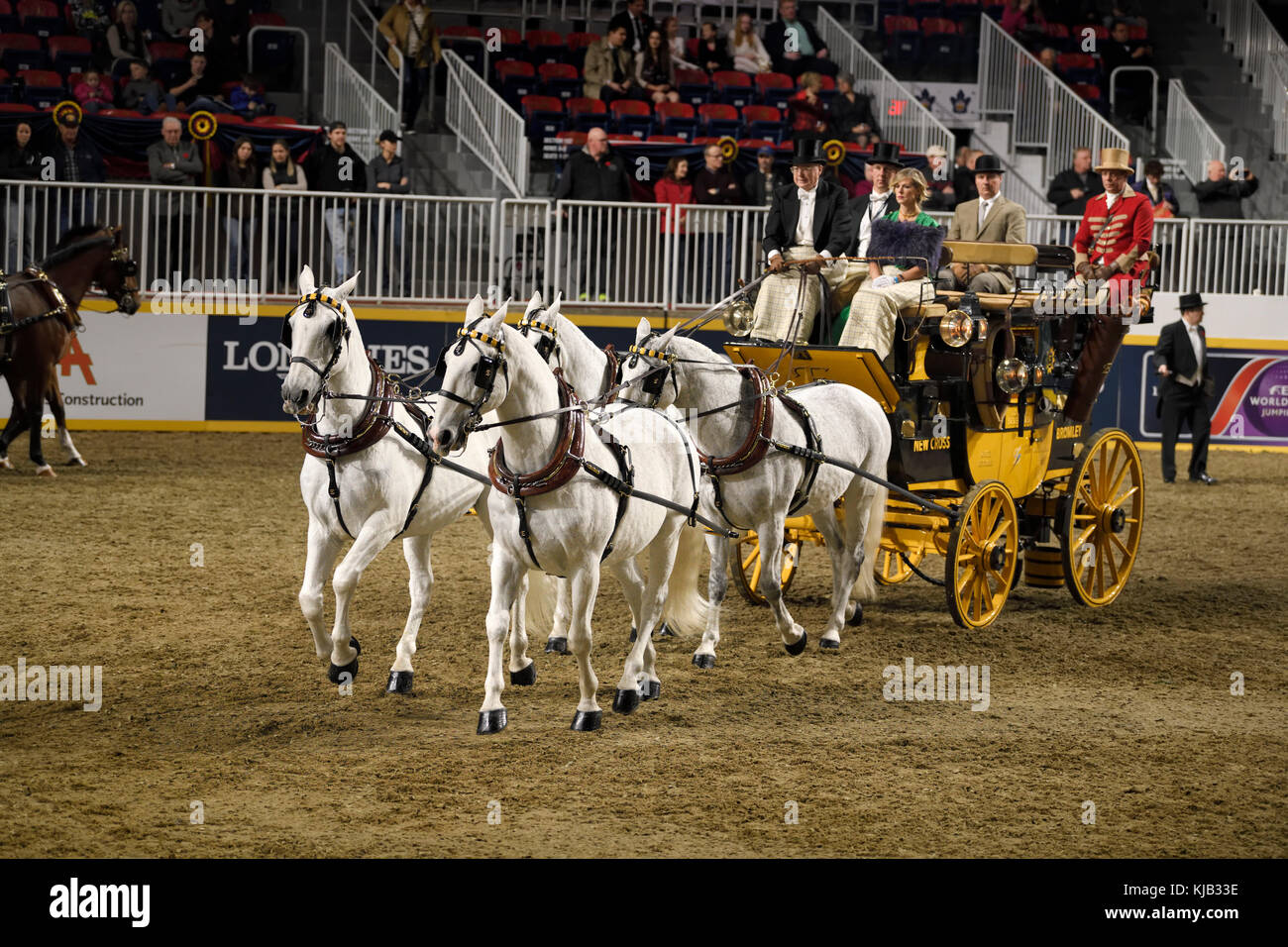 White horses at Green Meadows Four in Hand Coaching Class performance at The Royal Horse Show Ricoh Coliseum Exhibition - Stock Image