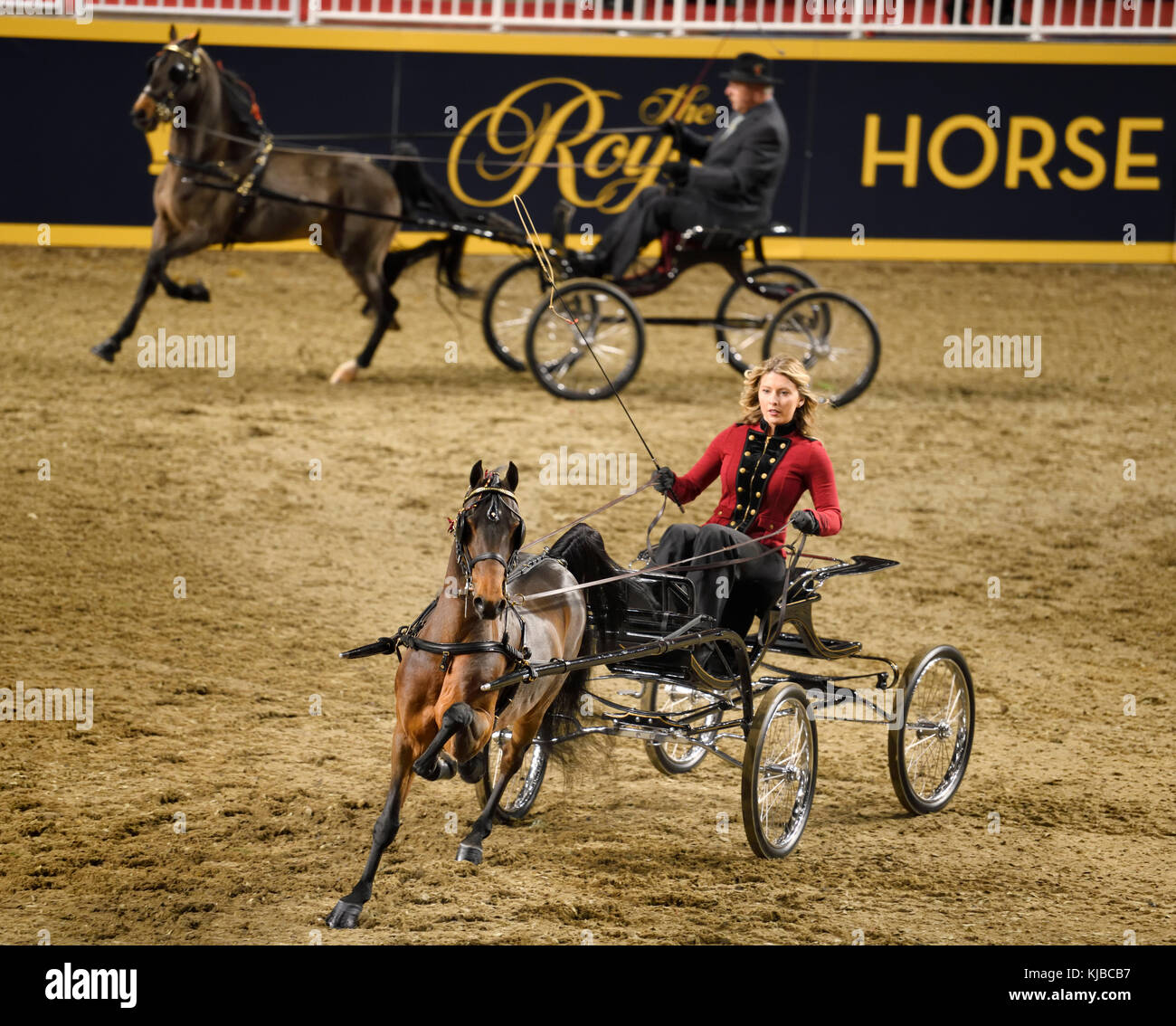Female driver in four wheel viceroy at Harness Pony Open competition at Ricoh Coliseum at 95th Royal Agricultural - Stock Image