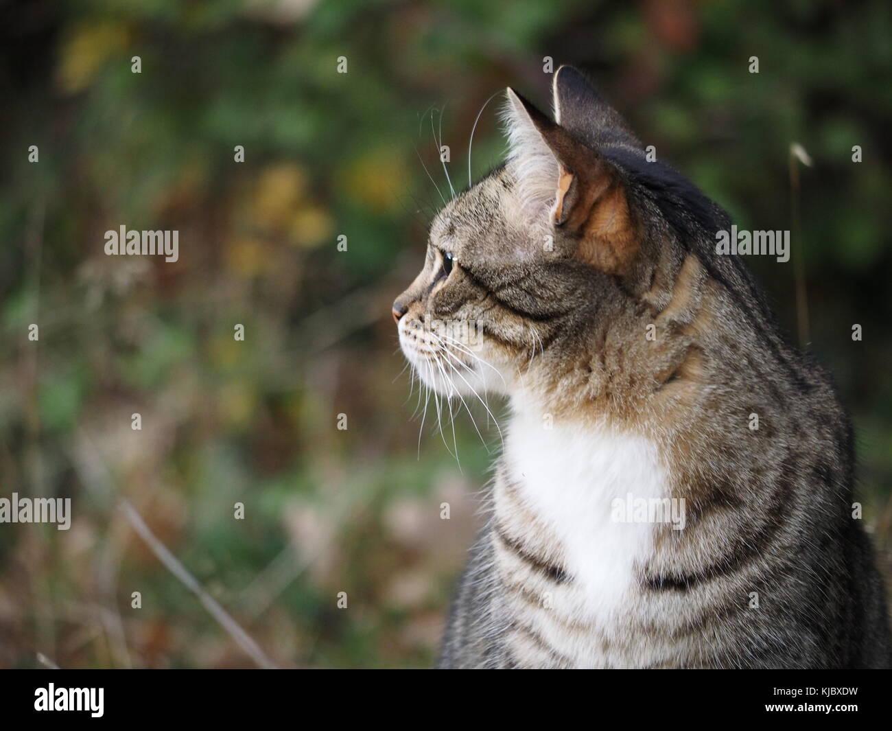 Cat in garden looking into distance - Stock Image
