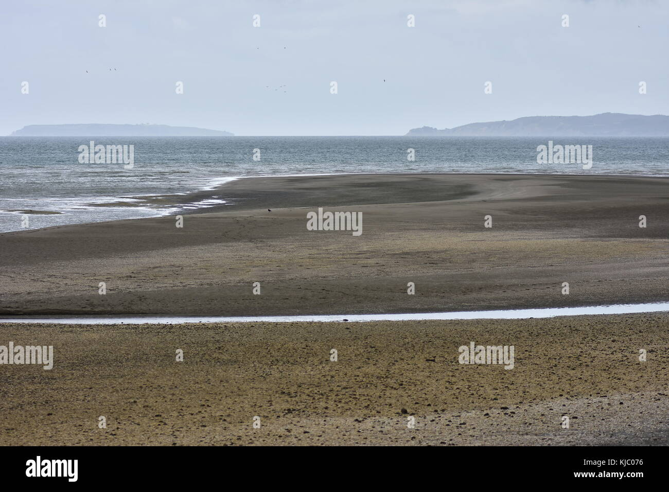 Flat dark sand beach during low tide in Hauraki Gulf in New Zealand. - Stock Image