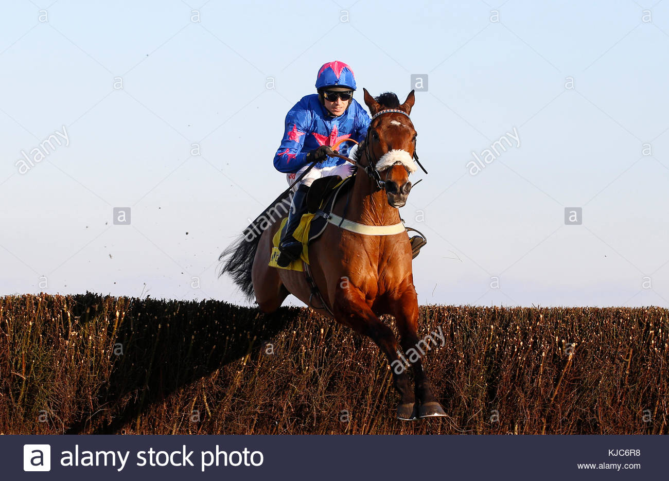 File photo dated 18-02-2017 of Cue Card ridden by Paddy Brennan - Stock Image