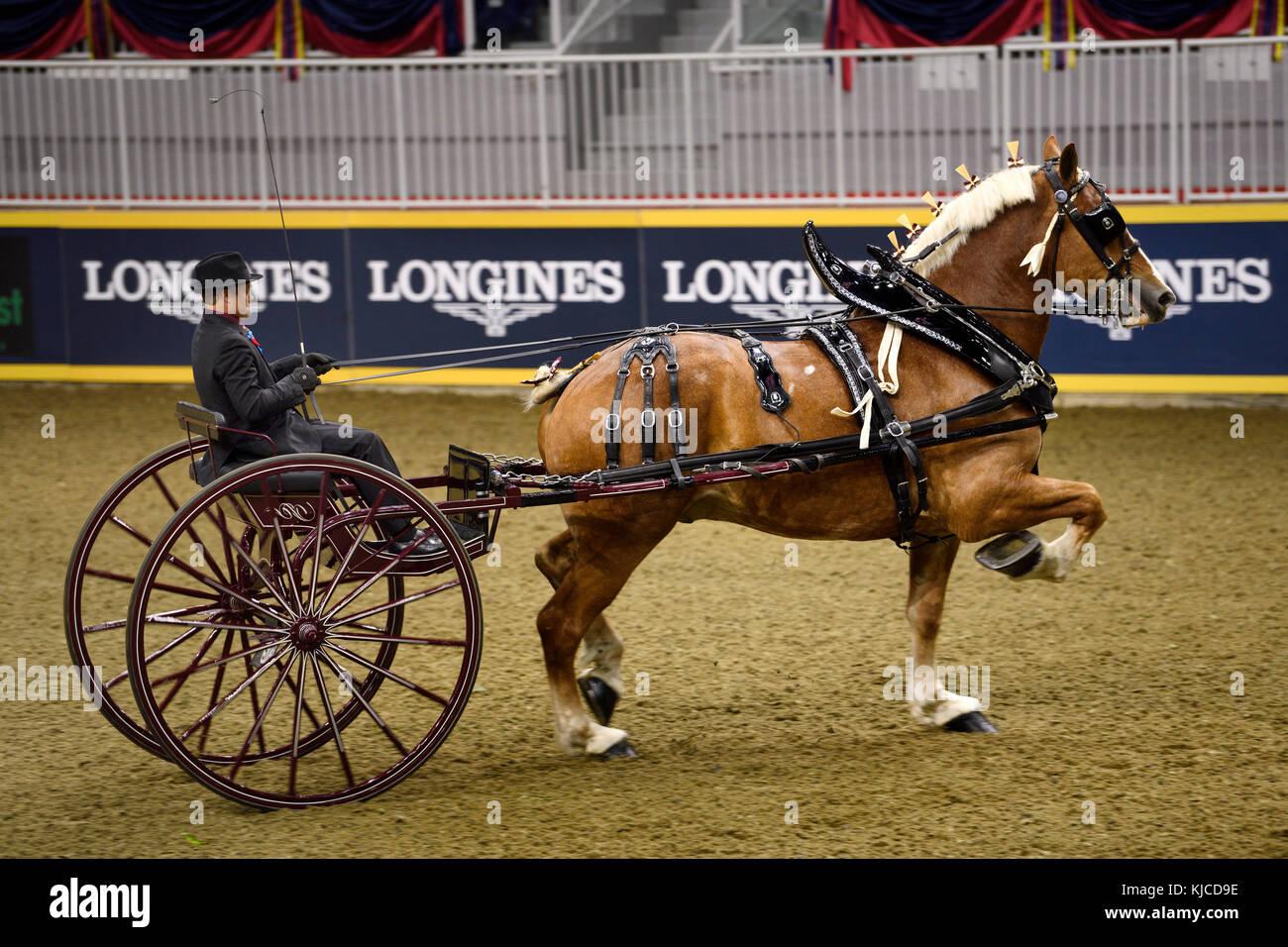 Kyle Forsyth driving draft horse cart at NASHHCS Classic Cart Series at the Royal Horse Show Ricoh Coliseum Toronto - Stock Image